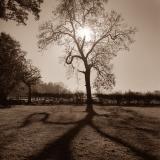 EVENING-SHADOW-HANBURY-Paul-Jones-