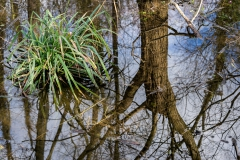 Waterworld: Droitwich Willow Carr