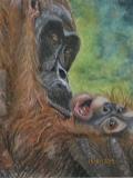 Orang-utan-mother-and-Baby.-2
