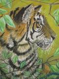 Watching-Bengal-Tiger-077